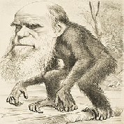 Darwin's Theory of Evolution: What is it?