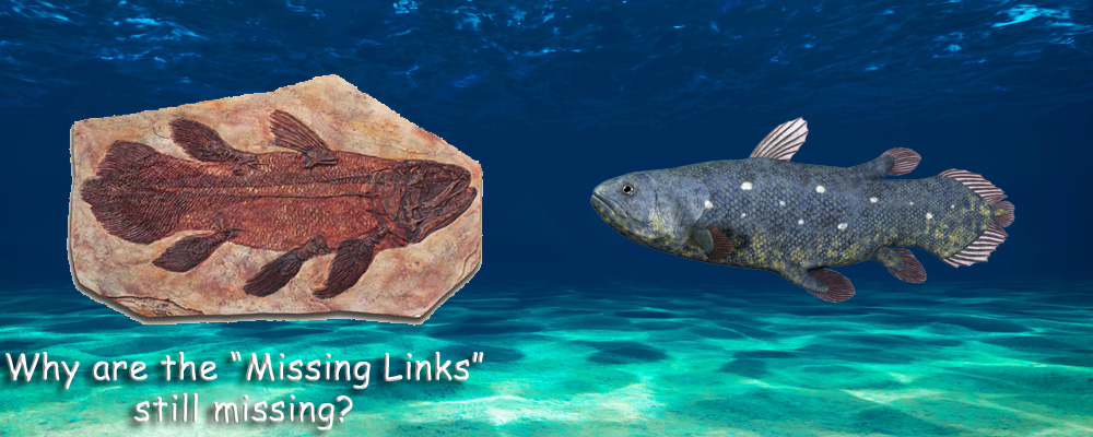 Fossil Record - Missing Links still Missing!